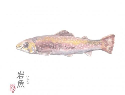 立春の旬:岩魚