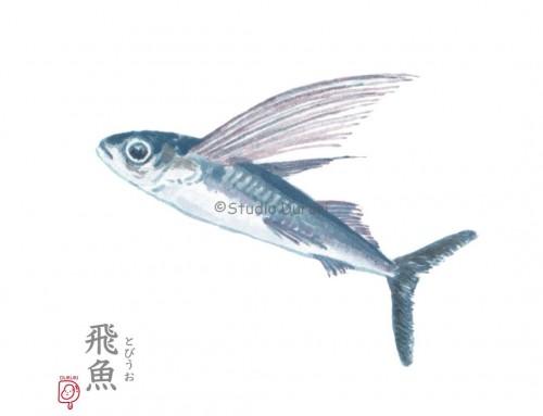 雨水の旬:飛魚