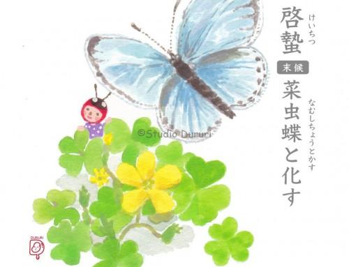 啓蟄・末候:菜虫蝶と化す