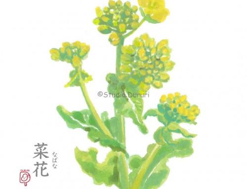 雨水の旬:菜花