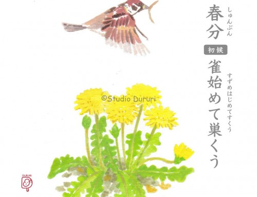 春分・初候:雀始めて巣くう